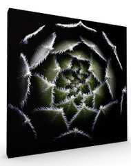 Stretched Canvas Sempervivum rosette by Victor Mozqueda