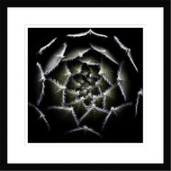 Framed Sempervivum rosette by Victor Mozqueda