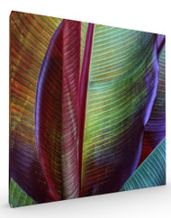 Stretched Canvas Banana Skin by Francois Casanova