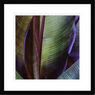 Framed Banana Skin by Francois Casanova