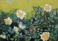 Wild Roses by Vincent van Gogh Premium Giclee