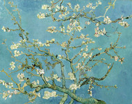Almond Blossom by Vincent van Gogh Premium Giclee