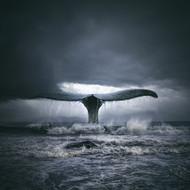 Art Print Surf n Whale by Tomasz Zaczeniuk