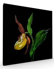 Stretched Canvas Lady Slipper Orchid by Nora De Angelli
