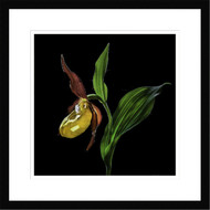 Framed Wall Art Lady Slipper Orchid by Nora De Angelli