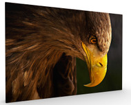 Eagle Pursues Prey by Adriana K.H, Stretched Canvas