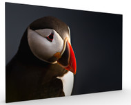 Puffin Portrait by Ennedi, Stretched Canvas