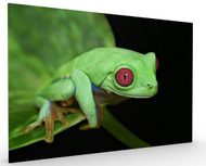 Red Eye Frog by Ferdinando Valverde, Stretched Canvas