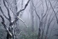 Misty by Sho Shibata, Landscape Art Print