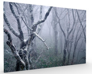 Misty by Sho Shibata, Stretched Canvas