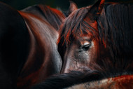 Sleep Huddle by Martin Stantchev Horses Art Print