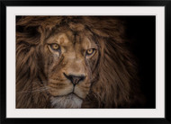 Brink of Extinction by Ashley Vincent Lion Wall Art