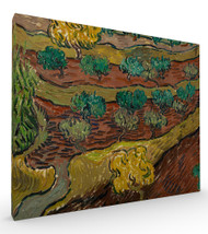 Olive Trees on a Hillside by Vincent van Gogh Stretched Canvas