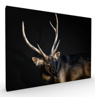 Alive and Kicking Wildlife Art Print by Pedro Jarque, Stretched Canvas