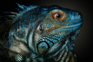 Dragons are Awake Wildlife Art Print by Pedro Jarque