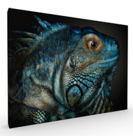 Dragons are Awake Wildlife Art Print by Pedro Jarque, Stretched Canvas