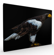 Fearless Wildlife Art Print by Pedro Jarque, Stretched Canvas
