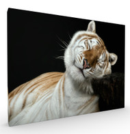 Inner Peace Wildlife Art Print by Pedro Jarque, Stretched Canvas