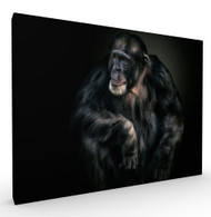 Kindness Wildlife Art Print by Pedro Jarque, Stretched Canvas