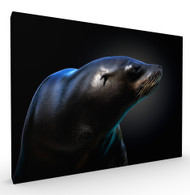 Seal Art Print by Pedro Jarque, Stretched Canvas