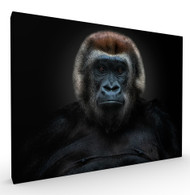 Shes Got The Look Wildlife Art Print by Pedro Jarque, Stretched Canvas