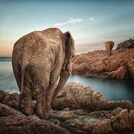Elephants by Adamix Art Print