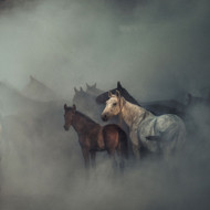 The Lost Horses by Huseyin Taskin Art Print
