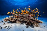 Marine Life by Gabriel Barathieu Seascape Print