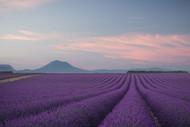 Lavender Field by Rostovskiy Anton Landscape Print