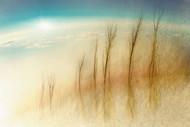 Above by Martin Cekada Landscape print