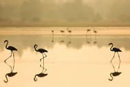 Flamencos by Martin Zalba Wildlife Print