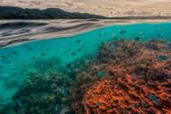 Uri Marine Reserve by Pavol Stranak Marine Print