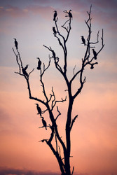 Before the Sunset by Niklas Rosenkilde Wildlife Print