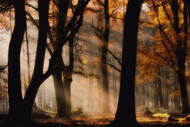 Autumn Light by Paul Kraaij Landscape Print