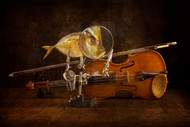 Fish and Violin by Brigbarkow Still Life Print