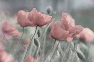 Softly by Anne Worner Floral Print