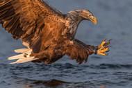 Power by Jose Pesquero Wildlife Print