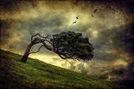 Winds of Change by Peter Elgar Landscape Print