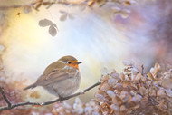 Robin on Dreams by Teuni Art Print