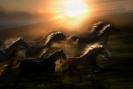Morning Gallop by Milan Malovrh Wildlife