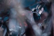 50 Hz by Fabien Bravin Wildlife Print