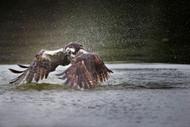 Wildlife Print Splash by Philip Chang