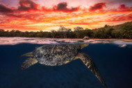 Green Turtle and Fire Sky by Baratheui Gabriel Marine Print