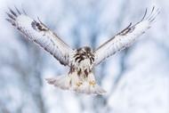 Wings Up by Valmar Valdmann Wildlife Print