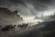 Migration by Huseyin Taskin Horses Print