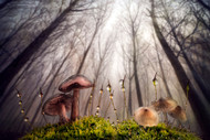 Small and Giant Creatures of the Woods by Alberto Ghizzi Panizza Landscape