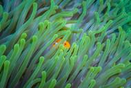 Peek-A-Boo by Rifky Setya Marine