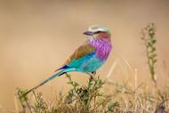 God's Gift to the Sky by Jeffrey C Sink Wildlife