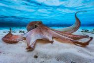 Octopus Day by Barathieu Gabriel Marine