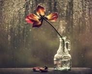 Bokehlicious Still Life by Valeriya Tikhonova Floral Print